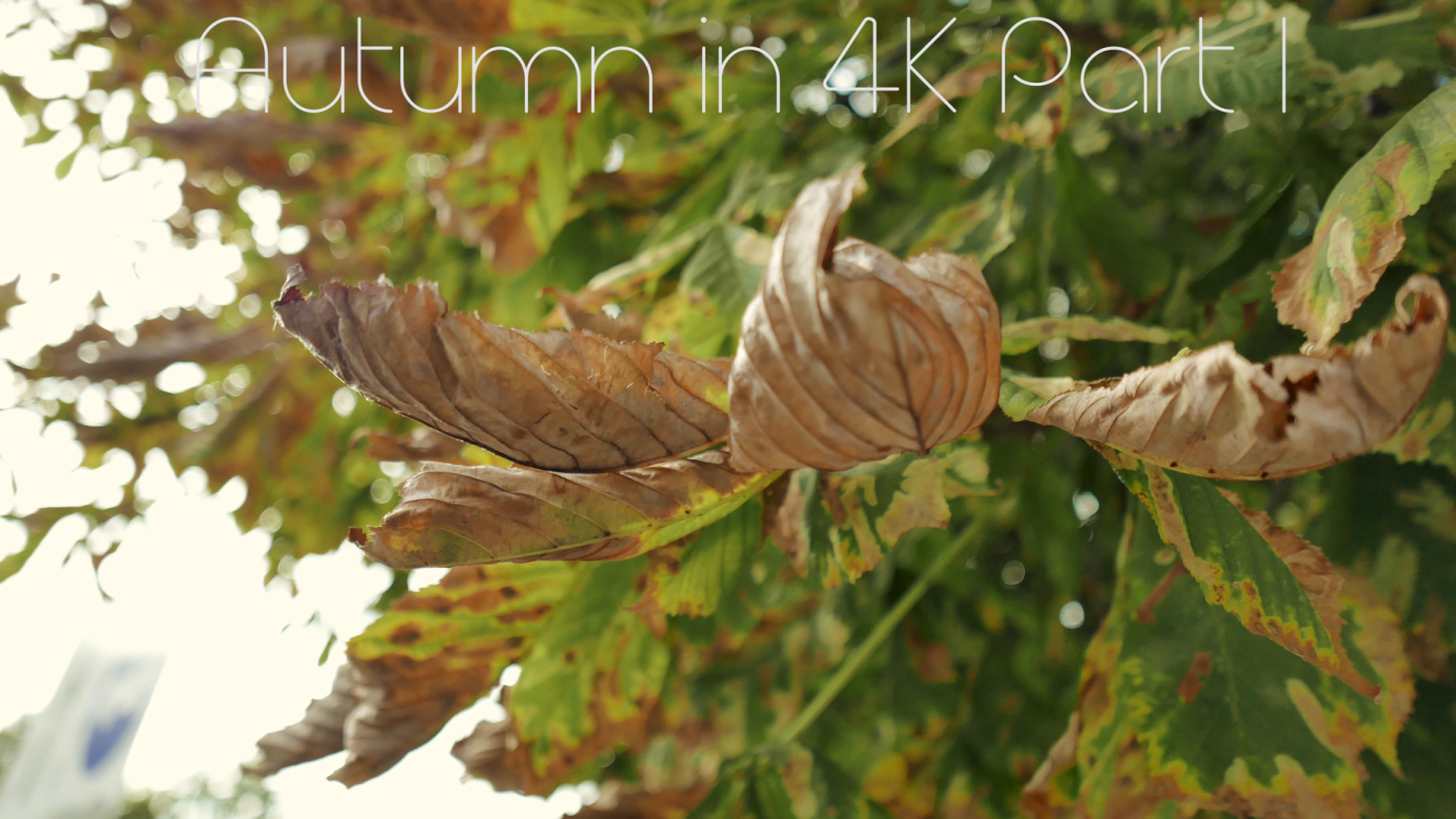 Autumn in 4K Part I
